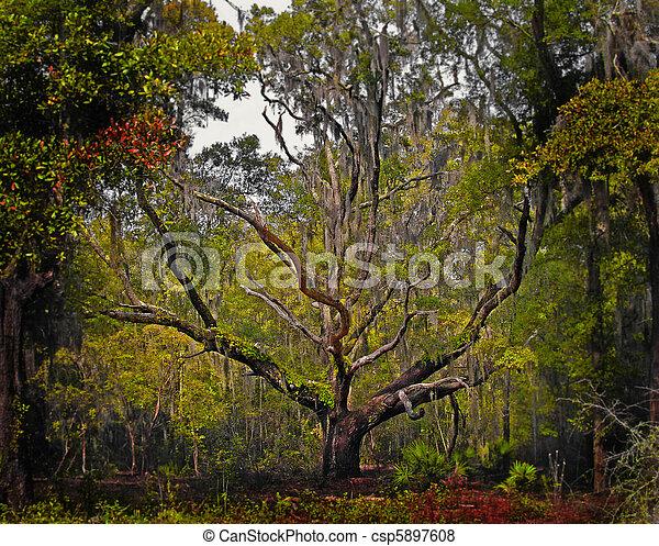 Florida Live Oak Tree - csp5897608