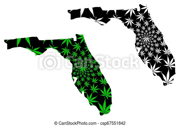 Florida - map is designed cannabis leaf - csp67551842