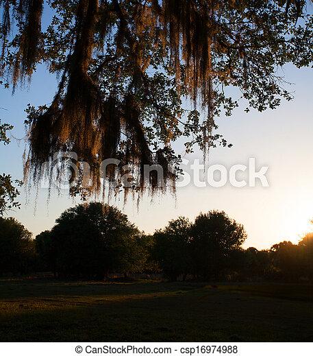 Florida Sunset - csp16974988