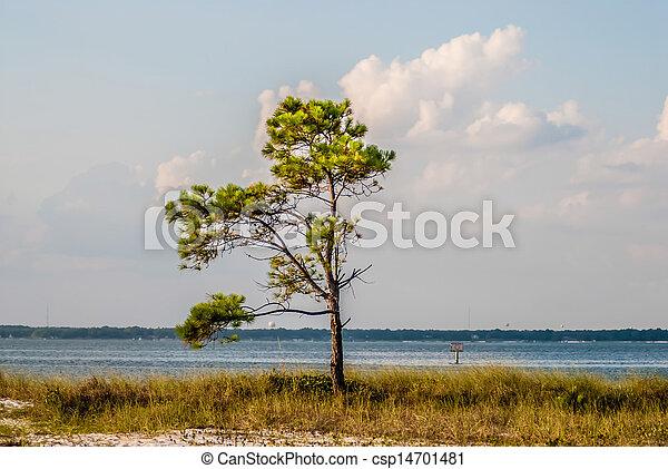 florida, tengerpart táj - csp14701481