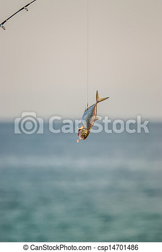 florida, tengerpart táj - csp14701486