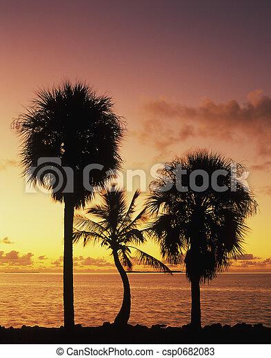 floride, levers de soleil, baie - csp0682083