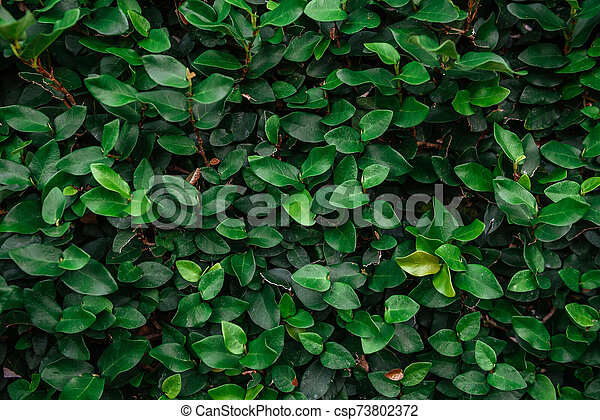 Floristic background. Green leaves on wall. - csp73802372