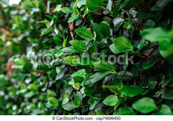 Floristic background. Green leaves on wall. - csp74699450