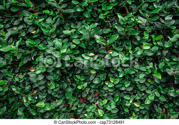 Floristic background. Green leaves on wall. - csp73128491