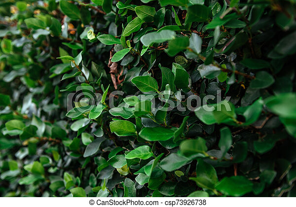 Floristic background. Green leaves on wall. - csp73926738