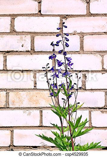 flower against brick wall - csp4529935