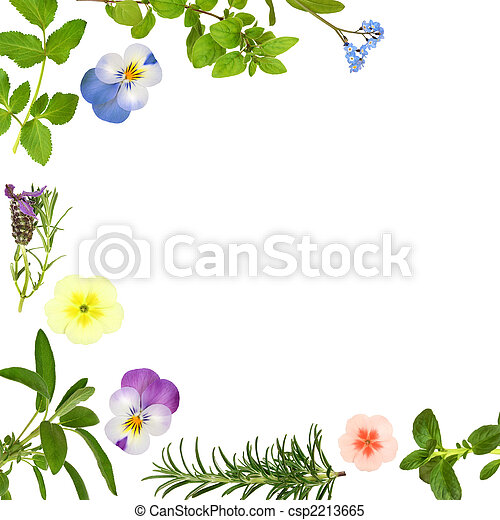 Flower And Herb Leaf Border Abstract Spring Flower Border With Herb