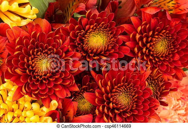 Flower background of red and yellow mums flower arrangement flower background of red and yellow mums csp46114669 mightylinksfo