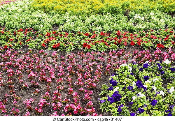 Flower bed full of flowers - csp49731407