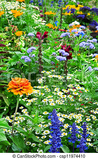 flower bed of bright flowers - csp11974410