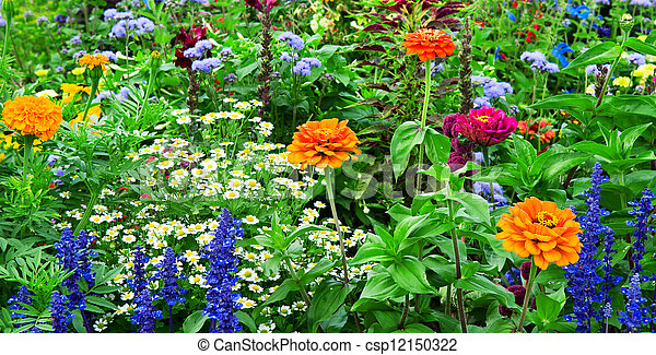 flower bed of bright flowers - csp12150322