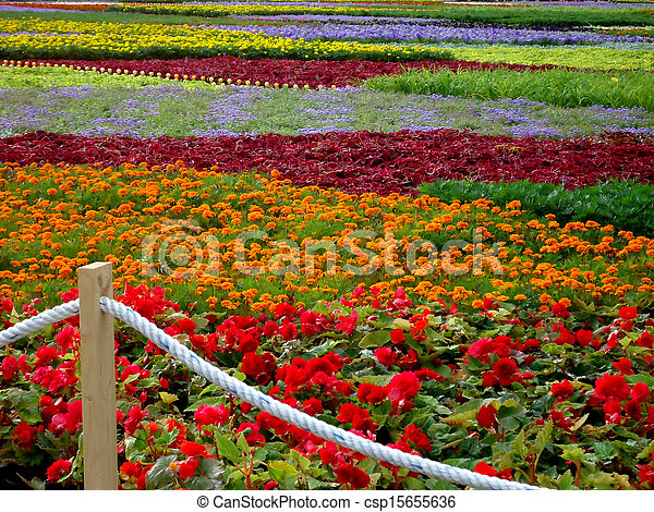 Flower-bed of many-colored flowers - csp15655636