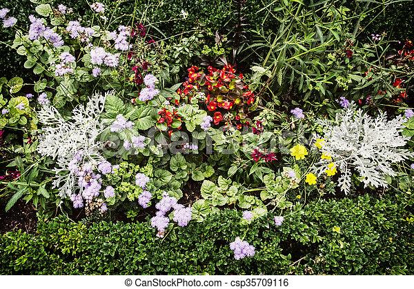Flower bed of various flowers - csp35709116