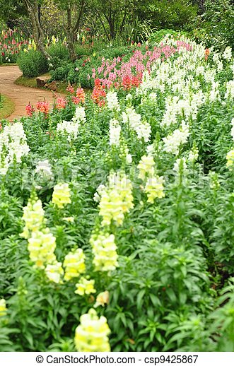 Flower Bed - csp9425867