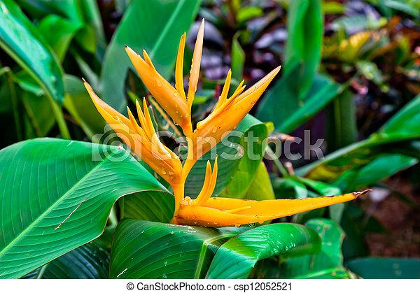 flower Bird of Paradise bird - csp12052521