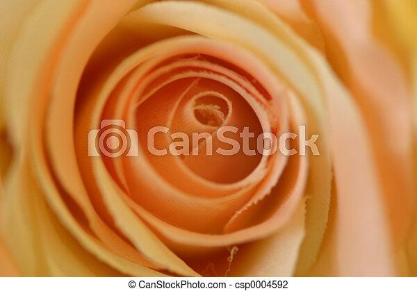 Flower blossom - csp0004592