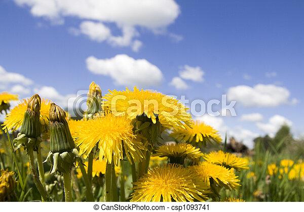 Flower dandelion on sky - csp1093741