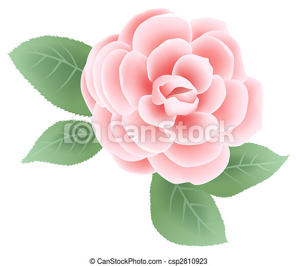 Drawing of pink flower with green leaves flower csp2810923 mightylinksfo