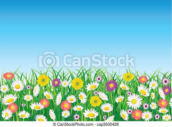 Flower field - csp3500426