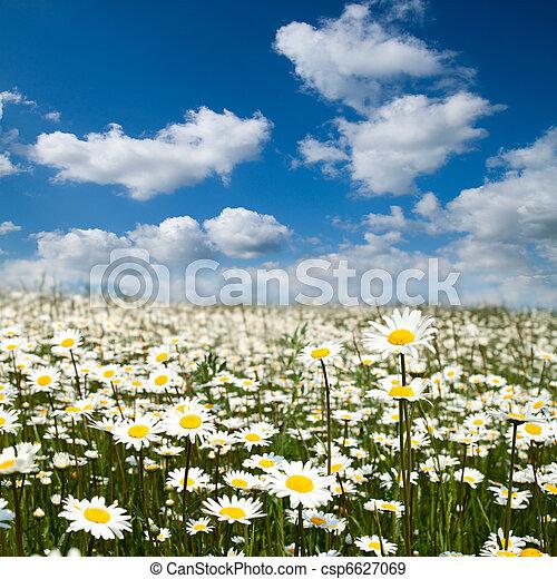 Flower field - csp6627069