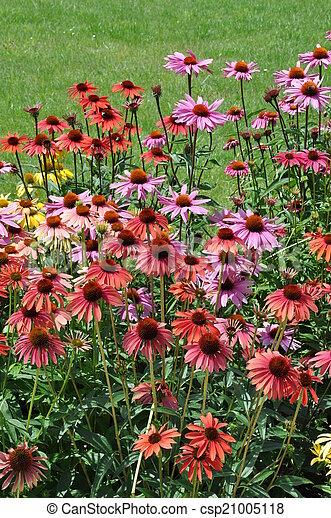 Flower garden in summer time - csp21005118