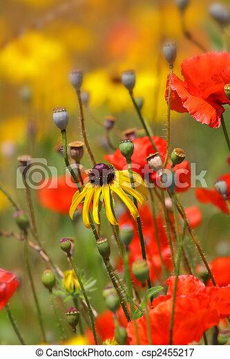 Flower garden - csp2455217