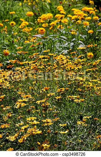 flower garden - csp3498726