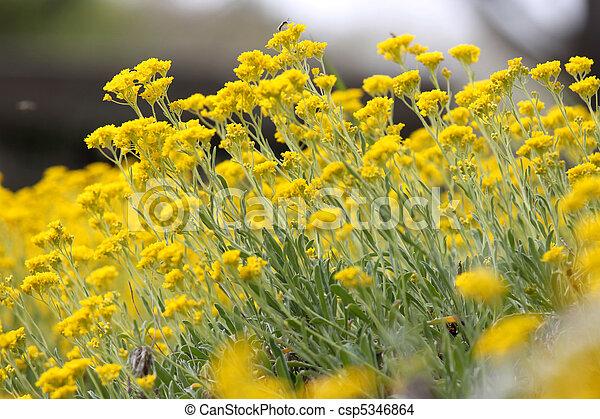 Flower garden - csp5346864