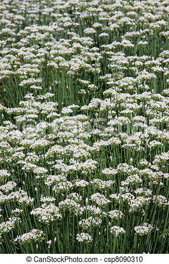 Flower garden - csp8090310
