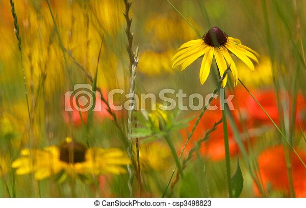 Flower garden - csp3498823