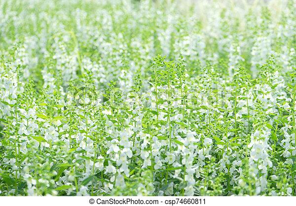 Flower Green grass on background - csp74660811