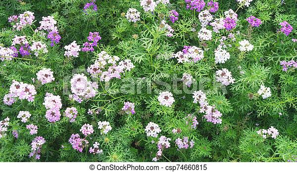 Flower Green grass on background - csp74660815