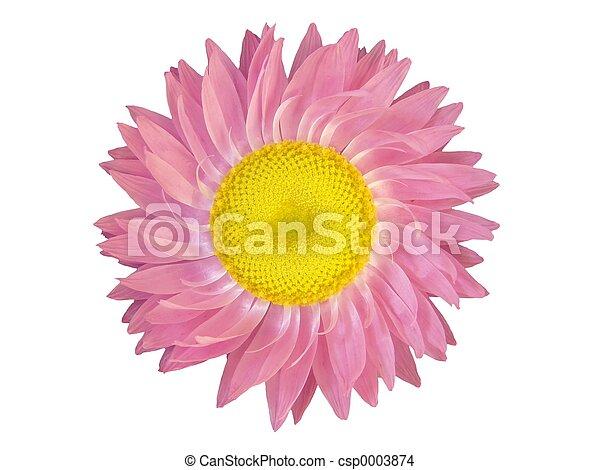 Flower Head - csp0003874
