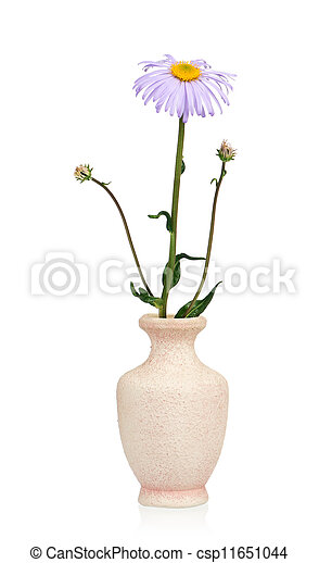 Flower in a vase - csp11651044