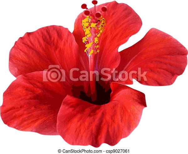 flower isolated on white. Vector illustration. - csp9027061