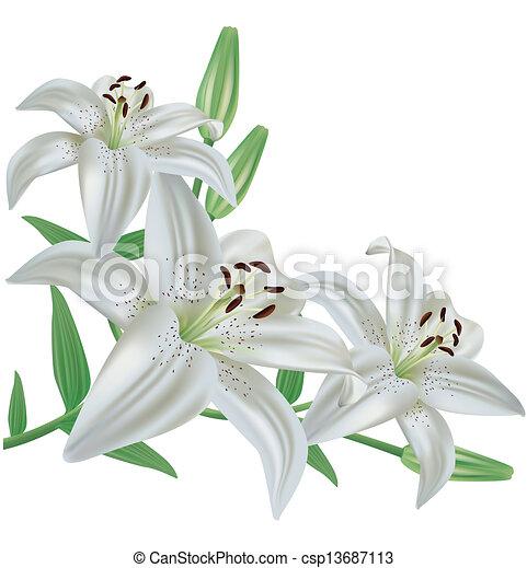 Flower lily isolated on white background white lily flower bouquet flower lily isolated on white background csp13687113 mightylinksfo
