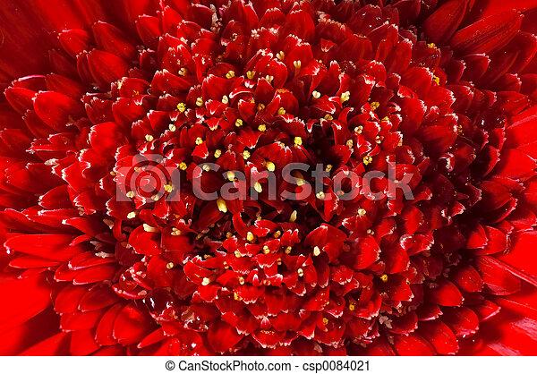 Flower Macro - csp0084021