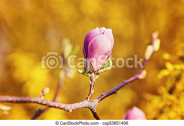 Flower Magnolia Flowering Against A Background Of Flowers Spring