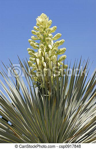 Flower of cactus - csp0917848