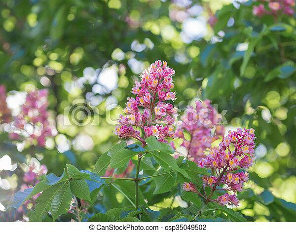 Flower of chestnut tree of pink flower on tree stock photography flower of chestnut tree csp35049502 mightylinksfo Gallery