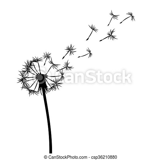Flower Of Field Dandelion Drawing Of Flower Of Field