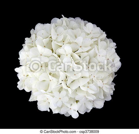 flower on a black background - csp3738009