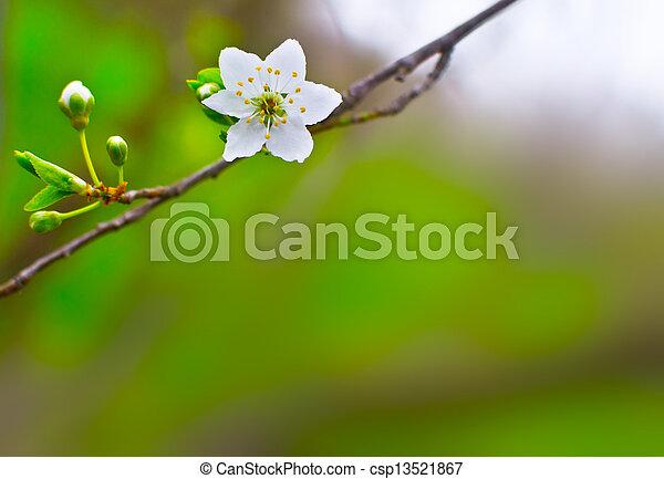 flower on a blurred background - csp13521867