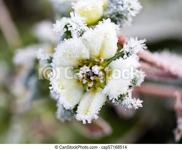 flower on the plant in the icy cold - csp57168514