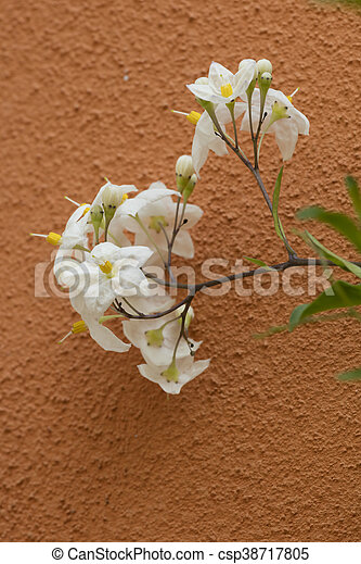 flower on the wall - csp38717805