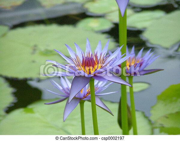 Flower - csp0002197