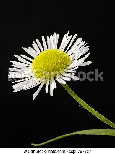 Flower - csp0797727
