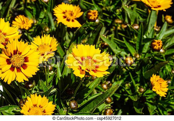 flower - csp45927012