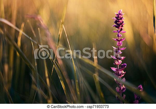 Flower - csp71933773